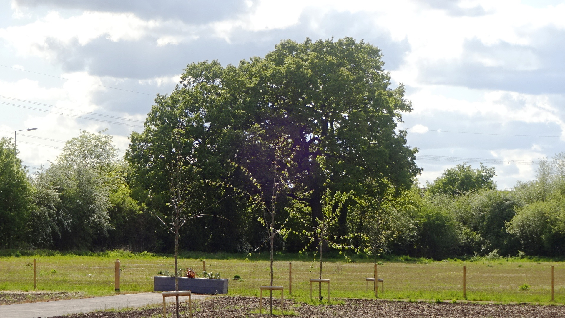Didcot trees  Willowbrook
